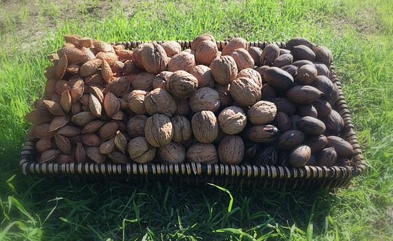 Organic In-shell Almonds 10 lbs-0
