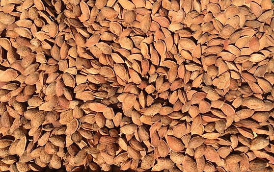 Organic In-shell Almonds 5 lbs-337