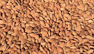 Organic In-shell Almonds 2 lbs-0